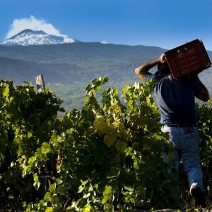 degustation vins siciliens