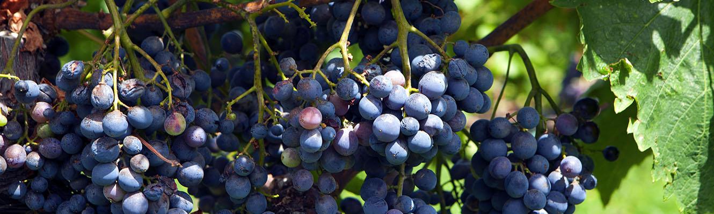 degustazione vini etna