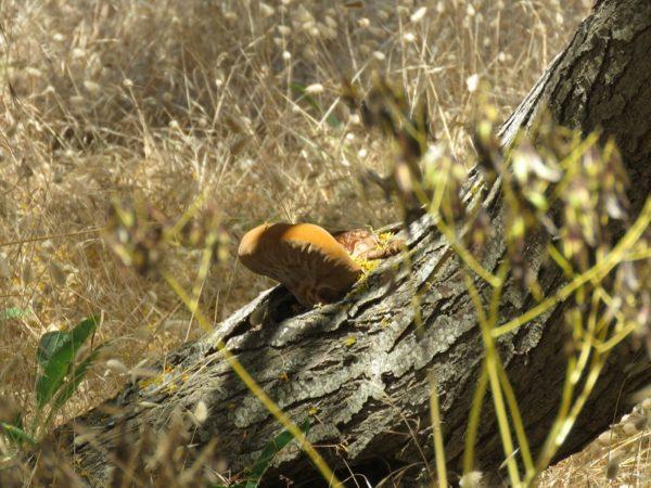 funghi etna 2